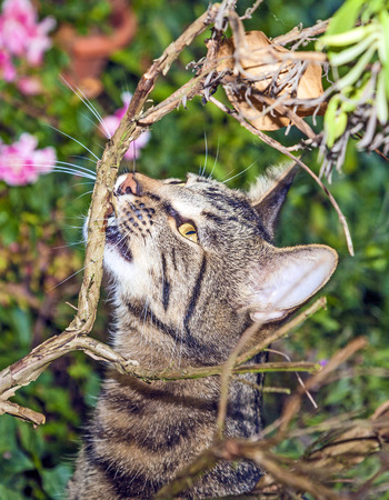 cat is hunting in the garden photo