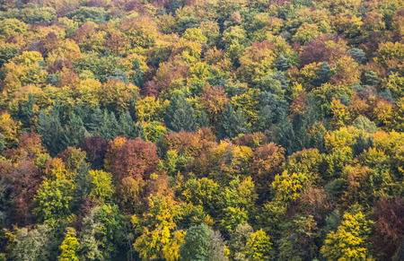 indian creek: beautiful trees in indian summer colors in Bavaria