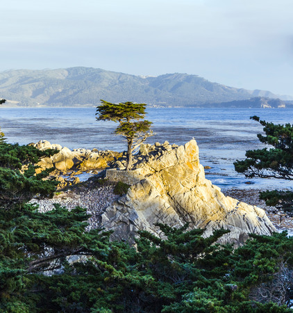 monterey: MONTEREY, CALIFORNIA - JUL 26, 2008: Lone Cypress tree view along famous 17 Mile Drive in Monterey. Sources claim it is one of the most photographed trees in North America.