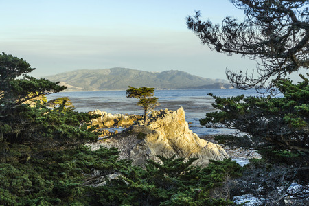 MONTEREY, CALIFORNIA - JUL 26, 2008: Lone Cypress tree view along famous 17 Mile Drive in Monterey. Sources claim it is one of the most photographed trees in North America.