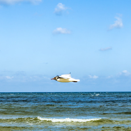 birds flying at the beach of baltic sea photo