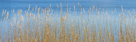 backwater: pattern of reed grass at the backwater Stock Photo