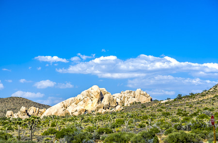 joshua tree national park: scenic golden rocks  in Joshua Tree National Park  in sunset