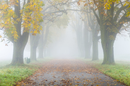 colorful alley in fog with trees in autumn photo