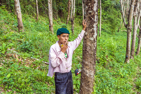 caoutchouc: KOH CHANG, THAILAND - JAN 4, 2008: worker at rubber tree plantation in Koh Chang, Thailand. The rubber plantation industry started at the island in 1899 and is still an important industry.
