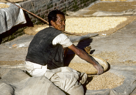 seldom: BHAKTAPUR, NEPAL - DEC 27, 1986: man treshing the corn after harvest in Bhaktapur, Nepal. Most farmer do farming fully manual as machines are seldom available.