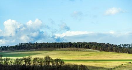 wertheim: landscape at Wertheim with vineyards in winter