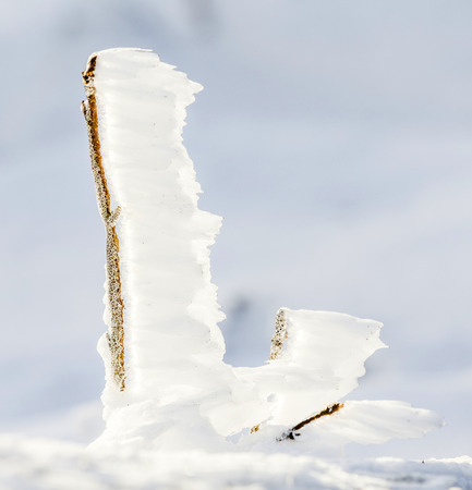 detail of snow and ice at frozen plant  at the winter mountain landscape  at Feldberg Mountain in Hesse, Germany photo