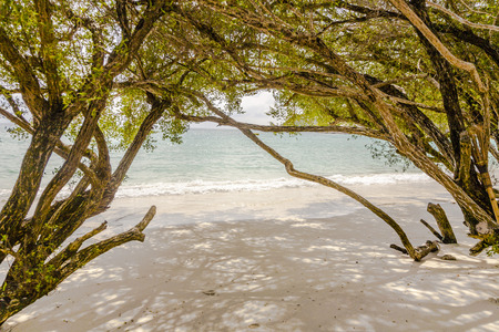 koh samet: tropical beach in Koh Samet, Thailand with trees Stock Photo