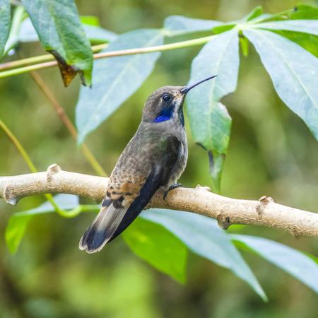 pecker: hummingbirds in Brazil at a feeding station