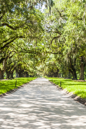 MOUNT PLEASANT, USA - JULY 21, 2010: Oak Avenue at Boone hall Plantation in Mount Pleasant, USA. The earliest known reference to the site is of 1681. It originated from a land grant given to Major John Boone.