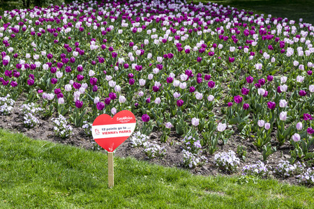 wurst: VIENNA, AUSTRIA - APR 27, 2015:  heart shape in the park with tulips for the european song contest in Vienna, Austria. Conchita Wurst was the winner in the last year.