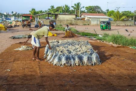 stockfish: NEGOMBO, SRI LANKA - AUG 20, 2005: fisherman staples fish at the beach in Negombo, Sri lanka. Drying fish is a traditional way to preserve fresh fish.