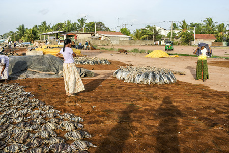 stockfish: NEGOMBO, SRI LANKA - AUG 20, 2005: women staple fish at the beach in Negombo, Sri lanka. Drying fish is a traditional way to preserve fresh fish. Editorial