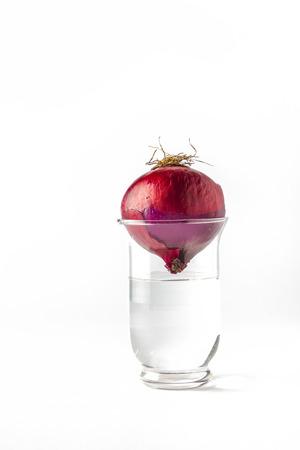 cabeza abajo: aislado cebolla en un vaso con agua boca abajo Foto de archivo
