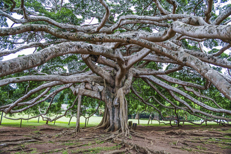 botanical Garden of Peradeniya, Kandy,Royal Botanical Gardens, asias most beautiful  botanical Garden Фото со стока
