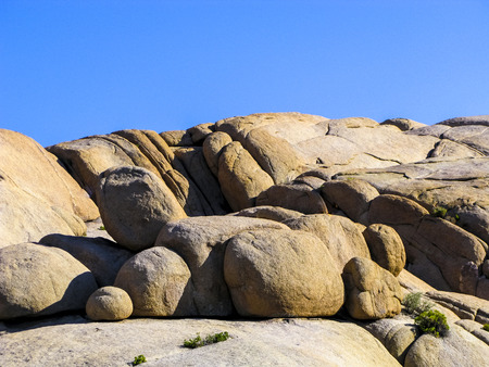 joshua: joshua tree with rocks in Joshua tree national park under blue sky