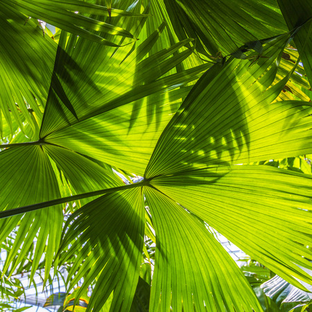 beautiful palm leaves of tree in sunlight