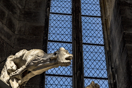 waterspout: gargoyle (water-spout) of Stephansdom Wien (St. Stephens Cathedral, Vienna)