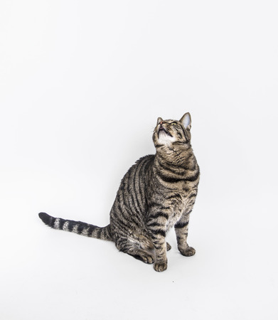 astonish: cute cat poses on an old white chair
