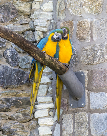pecker: Macaw sitting perched on a bench of a tree