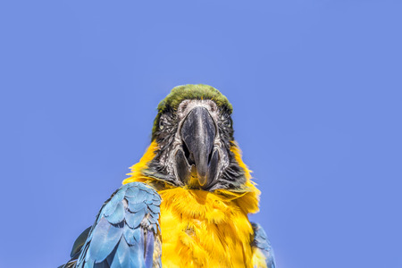 green winged macaw: Macaw sitting perched on a bench of a tree