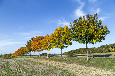 indian summer: tree alley in indian summer colors Stock Photo