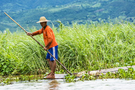 controling: Heho, Myanmar - AUG 15, 2015 : Intha lake farmer controls his field  in his typical canoe with a bamboo stick as rudder and navigation instrument. Editorial