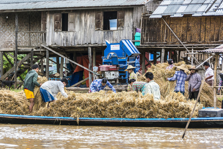 thresh: Heho, Myanmar - AUG 15, 2015 : people at inle lake thresh the corn which is delivered by boat. Harvesting in Myanmar is still a hand made job.