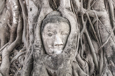 ajutthaya: buddhas head in Mahathat temple is covered by roots of a tree