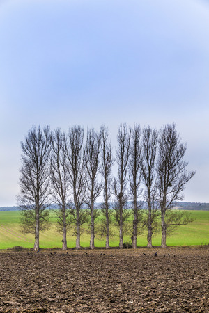 ddr: leaveless trees in winter inrural area with plowed fields