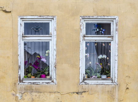 orchid house: old window with orchid flower decoration inside