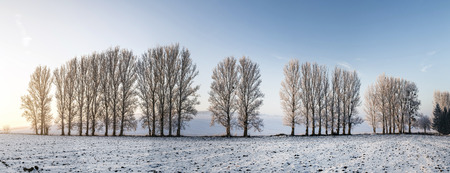covered fields: scenic tree alley in winter with snow covered fields in Thuringia