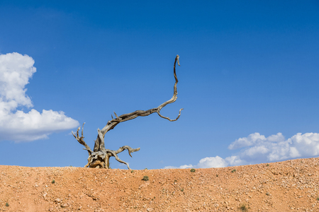burl wood: scenic dead wood root in the dry landscape under blue sky Stock Photo