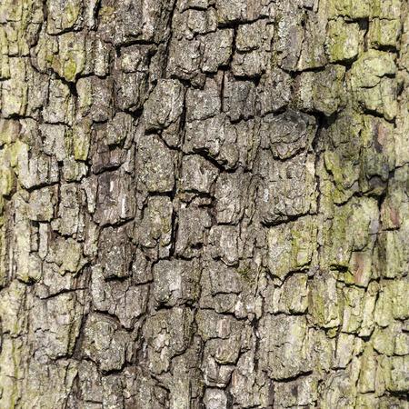 close-up van de schors van een eik geeft een harmonisch patroon