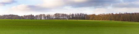 fleeing: scenic Landscape near Bad Frankenhausen with fleeing roe deer with fields
