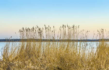 backwater: backwater landscape at the island of Usedom with reed grass at the baltic sea