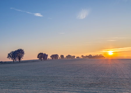 field sunset: white icy trees in harmonic snow covered landscape