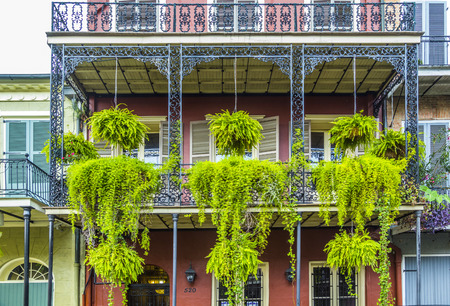 bourbon street: typical iron balcony with green flowers in the old part of New Orleans