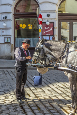 coachman: VIENNA, AUSTRIA - APR 27, 2015: coachman of traditional horse riding in vienna  feeds the horses.  The number of horse riders is limited and they have a special licence.