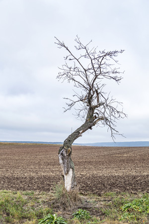 old apple tree grows on a meadow in autumn