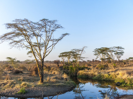 sunset in the serengeti national park with tree