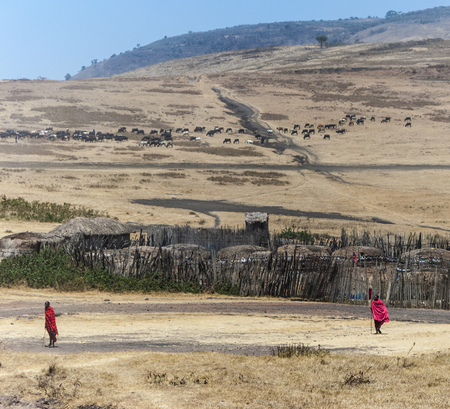 cattle guard: NGORONGORO, TANZANIA - AUG 20, 2016: view of small village in Ngorongoro national park in typical local architecture with people.