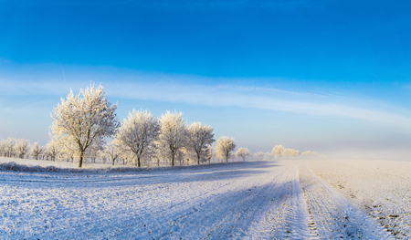white icy trees in harmonic snow covered landscape