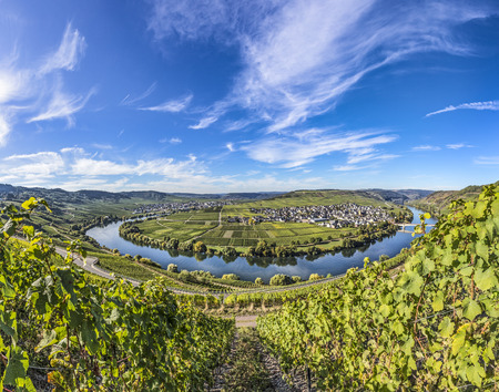 Famous Moselle river loop in Trittenheim, Germany. Stock Photo