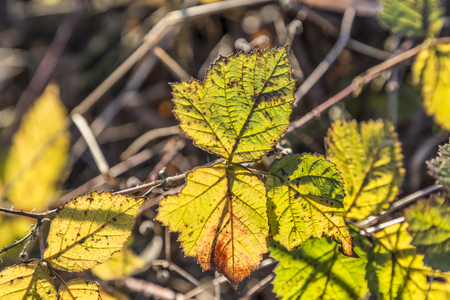 indian summer: leaves in indian summer colors in the forest