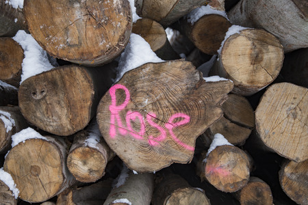 stapled: pile of cutted trees in the forest with painting rose Stock Photo