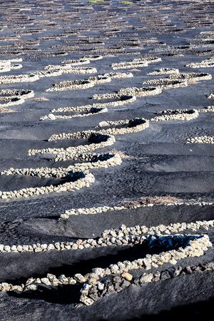 ランサローテ島の火山性の土壌にラ ゲリアの有名なブドウ畑