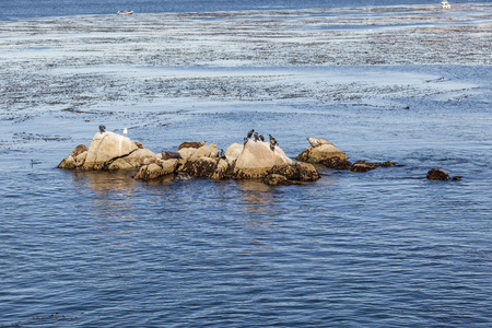 sea Lions, cormorants and other birds relax at a rock in the blue ocean