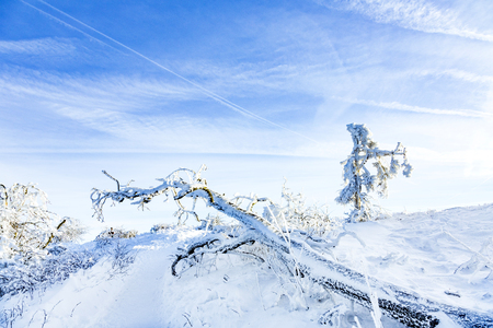 Sunshine under the winter calm mountain landscape with beautiful fir trees on slope at Feldberg Mountain in Hesse, Germany